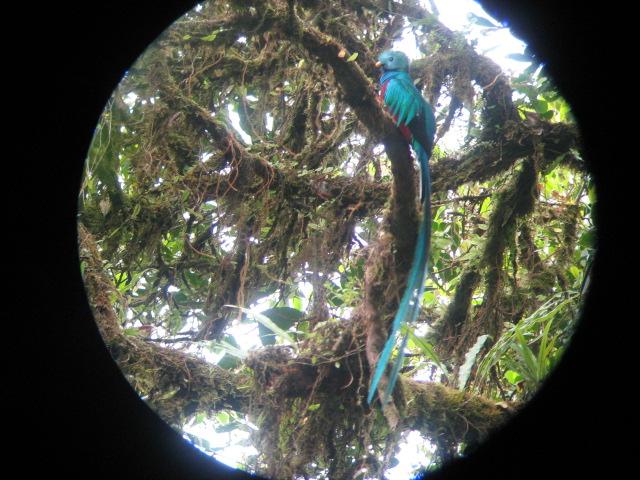 Horseback Ride to La Oropendola Waterfall Tour - Rincon de la Vieja Costa Rica